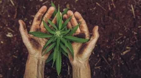 Investing in cannabis stocks
