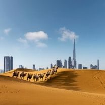 Desert in UAE with business district on background