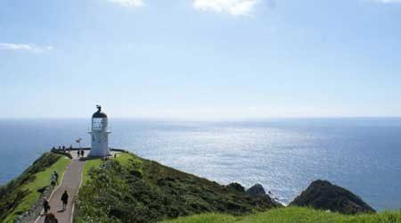 Compare Cape Reinga tours