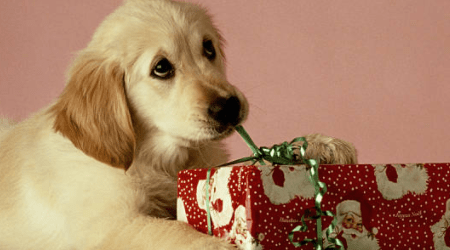 Christmas gifts for dogs 2020