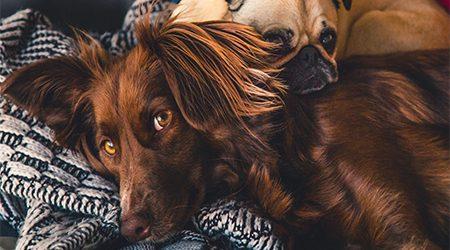 Pet care loans