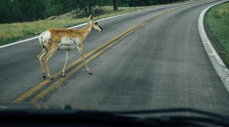 Does car insurance cover hitting an animal?