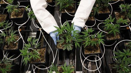 Cannabis crowdfunding sites for your business