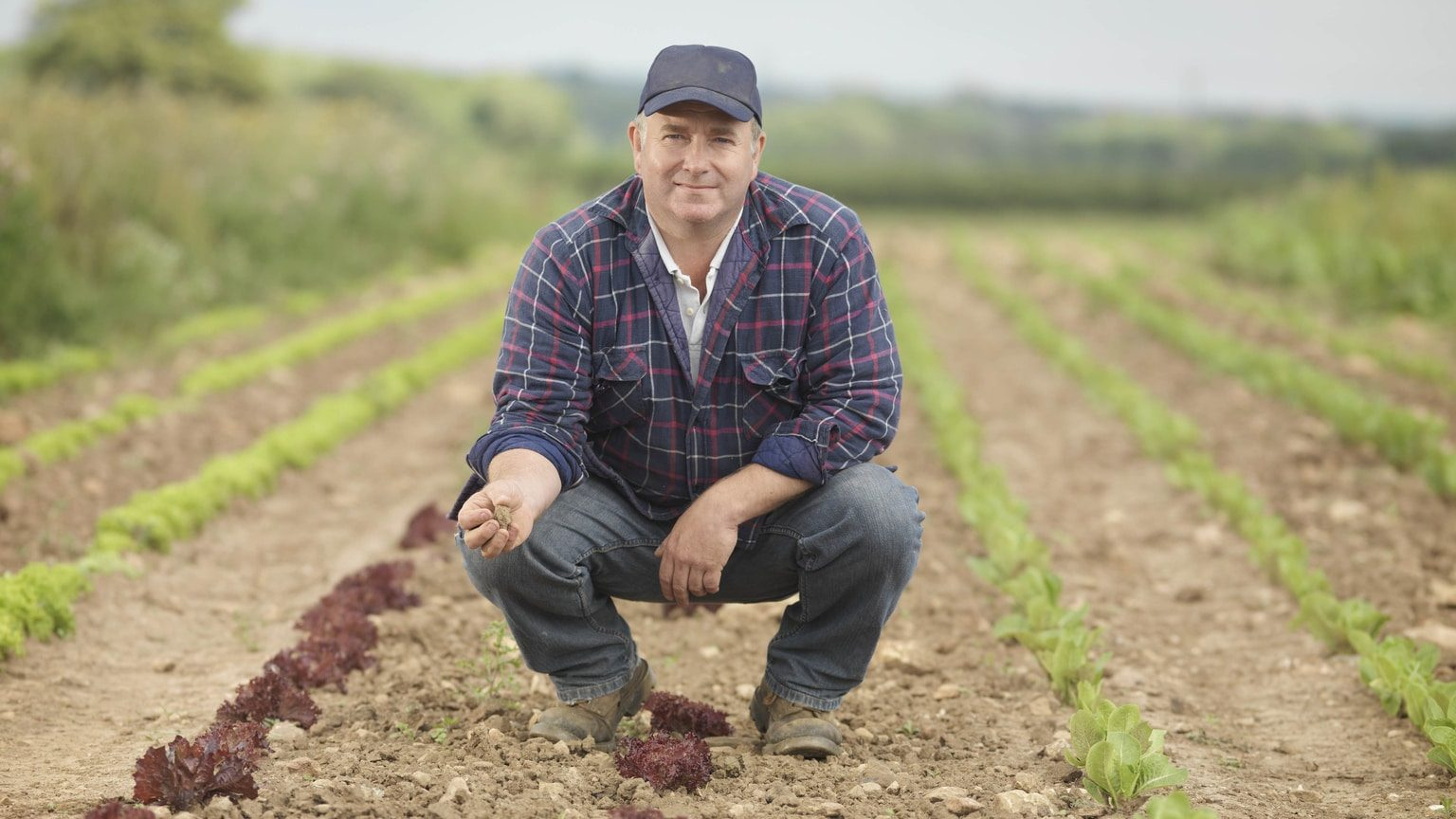 Farmer in a field managing crops