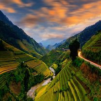 Rice field terraces in Sapa, Vietnam