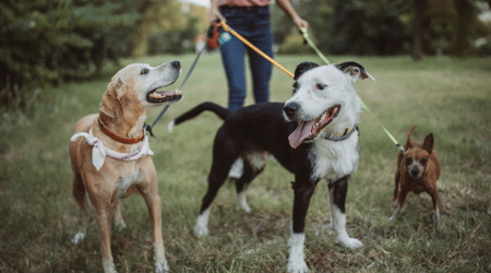 Setting up a dog-walking business