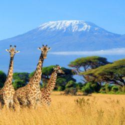 Kenya_Featured_Image
