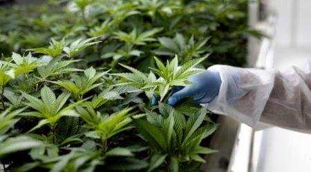 Invertir en acciones de cannabis